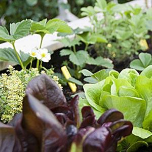 Plants fleurs légumes
